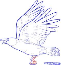 How to Draw a Crow, Step by Step, Birds, Animals, FREE Online Drawing Tutorial, Added by Dawn, February 13, 2011, 2:05:42 pm