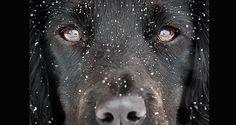 dog photographer - Google Search