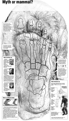 The Legend Of The Jocassee Gorges Sasquatch Hunting Bigfoot, Bigfoot Sasquatch, Mythical Creatures, Fantasy Creatures, Bigfoot Pictures, Bigfoot Sightings, Mothman, Ancient Mysteries, Cryptozoology