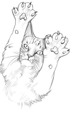 Cool Art Drawings, Pencil Art Drawings, Cat Drawing, Art Drawings Sketches, Painting & Drawing, Animal Sketches, Animal Drawings, Cat Sketch, Arte Sketchbook