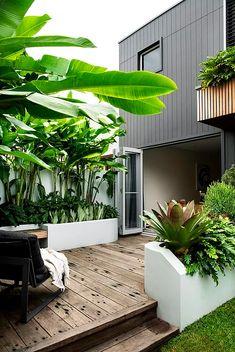 Tropical Garden Design, Tropical Landscaping, Garden Landscaping, Back Garden Landscape Design, Small Tropical Gardens, Tropical Patio, Garden Beds, Home And Garden, Screen Plants