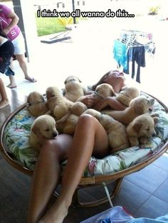 Oh god I want to do this! Talk about a stress buster! You cannot be unhappy while covered in fluffy baby animals.