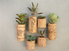 Cork Magnet Mini Planters