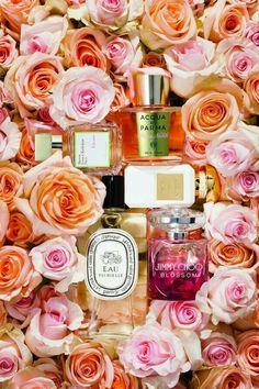 Rose fragances