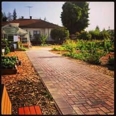 The beautiful Forge garden. The pathway resembles Palm Drive!