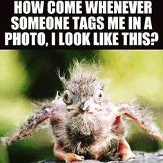 Too true #instagram #photographs #lookingbad #jokes #joker #vanity #socialmedia #facebook #twitter #pinterest #meme #memes #lol #lmao😂😂😂 #lmao    #Regram via @alphareboot