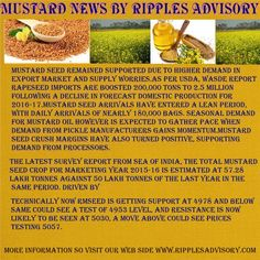 Share and Stock Market Tips: Mustard Oil News Update