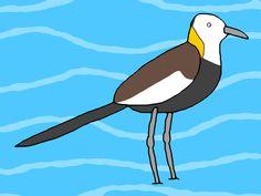 Pheasant-tailed jacana / #UXGA #Animal #Bird #レンカク