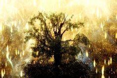 tree of life at the end of the knowing pictures of | The Most Disappointing Thing Since My Son: The Fountain