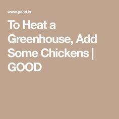 To Heat a Greenhouse, Add Some Chickens | GOOD