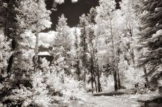 Wratten Filters for Infrared Photography today on MIrrorless Photo Tips (but not just for mirrorless shooters) www.mirrorlessphototips.com