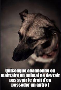 Quiconque abandonne ou maltraite un animal ne devrait pas avoir le droit d'en posséder un autre !