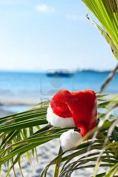 red santa's hat hanging on palm tree at the tropical beach. christmas in tropical climate concept Tropical Christmas, Beach Christmas, Coastal Christmas, Christmas In July, Coastal Fall, Merry Christmas, Christmas Friends, Aussie Christmas, Christmas In Australia