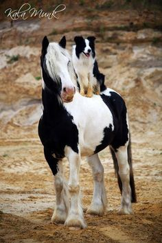 Country Living ~ Black and white twins