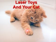 Cats get amused by laser toys. The little moving dot tights make them even more interesting to your cat. Wood Animal, More Fun, Tights, Social Media, Cat, Toys, Animals, Activity Toys, Animales