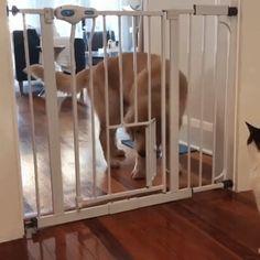 Cat door? Pffffft... Doggie door.