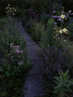 Garden path at nightfall