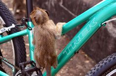 My new bicykle and baby monkey