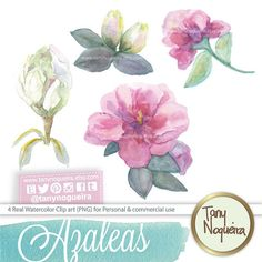Azalea flowers  clip art images watercolor hand painted PNG transparent background for blog cards invitations