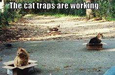 cat traps @Jess Pearl Meade
