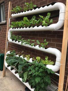 Hydroponic Farming, Hydroponic Growing, Hydroponic Plants, Aquaponics Diy, Hydroponics System, Ebb And Flow Hydroponics, Vertical Hydroponics, Aeroponic System, Indoor Hydroponics