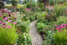 Geraniums, Plants, Plant, Planets