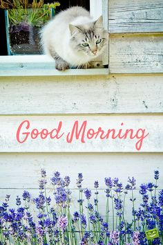 Good Morning image with cat and lavender flowers.
