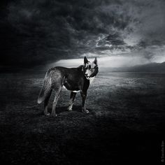 """""""A picture is worth a thousand words."""" The saying couldn't be more apt than in the case of shelter animals looking for forever homes: it has been repeatedly proven that good photos greatly increase their chances of being adopted. Inspired by this fact, Hungarian artist Sarolta Bán launched the """"Help Dogs with Images"""" project. #rescue #adoptdontshop"""