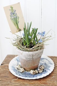 VIBEKE DESIGN Pot-It-Up with BULBS & ViNtaGe Post Card...