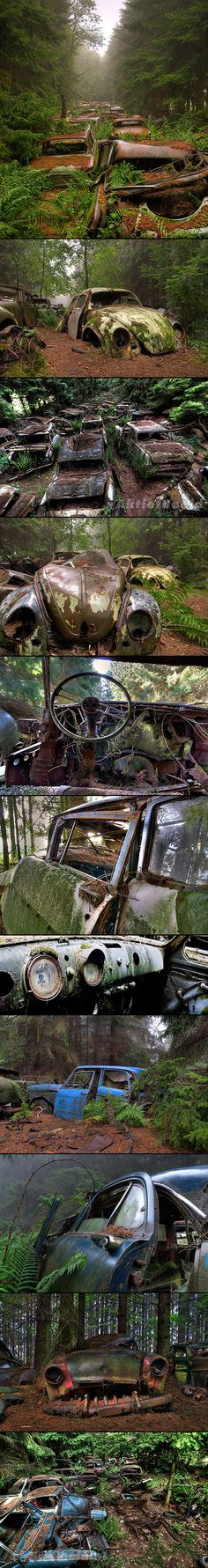 """These spooky apocalyptic images are not a scene from """"Walking Dead"""", they were actually taken at one of the biggest car cemeteries in the world – the Chatillion Car Graveyard, Belgium."""