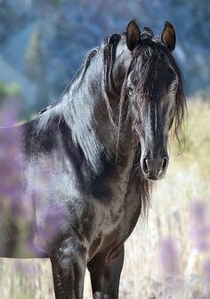 Andalusian stallion Ventisco SG II, Spain. © Alexia Khruscheva 2014