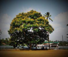 Ann Fernandez Photography © #annfernandezphotography #India #Kerela #Cochin