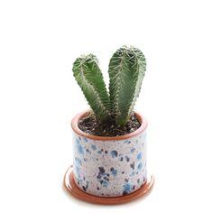 Small Cacti Planters, Peacock Eyes –/ babasouk.ca