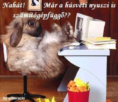 HÚSVÉT Bunny Slippers, Pink Slippers, Keep Smiling Images, Can Cats Eat Ham, Rabbit Wallpaper, Funny Rabbit, Happy Cow, You Are Cute, Friends Forever