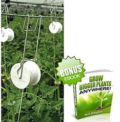 Grow tomatoes and crops vertically in a greenhouse with a FREE ebook!