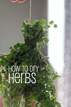 Garden Designs Objects Ideas 2018 : Great post on how to dry your own herbs. If you grew herbs this past summer like me, then fall is the time of year to dry those herbs for storage to use in the winter. Container Gardening, Gardening Tips, Amigurumi For Beginners, Cactus Y Suculentas, Healing Herbs, Growing Herbs, Kraut, Dream Garden, Fresh Herbs