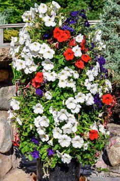 In die Erde eines Blumentopfes ein Plastikrohr setzen: eine geniale Idee um viele blühende Pflanzen zu haben - KlickDasVideo.de