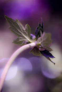 #Bokeh Photography to catch the light by edithnero on 500px...Beautiful !
