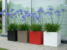 Elho plantenbakken met agapanthus