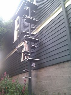 CAT -LADDERS: Washington. Fun steps for enclosed catio or indoor garden room. #cats #catio #CatStairs.