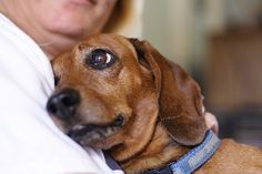 21 reasons a dog is the best investment you will ever make...huffingtonpost  Loving Klaus by Aaron Jacobs, via Flickr