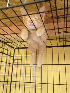 空飛ぶ子ネコ