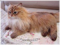 Felt wool work - cat by Japanese artist merino117