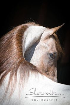 Awesome photo of this beautiful horse                                                                                                                                                                                 More