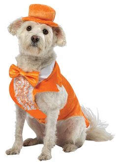 Lloyd Christmas Orange Tuxedo Dumb Dumber Dress Up Halloween Pet Dog Cat Costume #RastaImposta  100 each