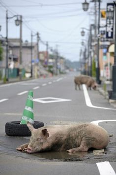 Tomioka - La città degli animali e di Naoto - Paesi Fantasma