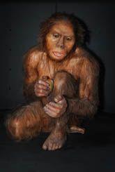 Homo habilis en el MEH.