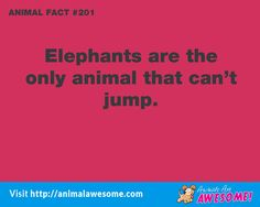 Visit Animals Are Awesome - http://animalawesome.com
