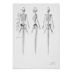 Esqueleto da sereia poster