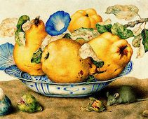 Pears in a Bowl by Giovanna Garzoni